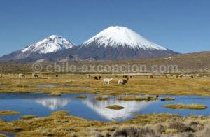 Nord du Chili Parc Lauca